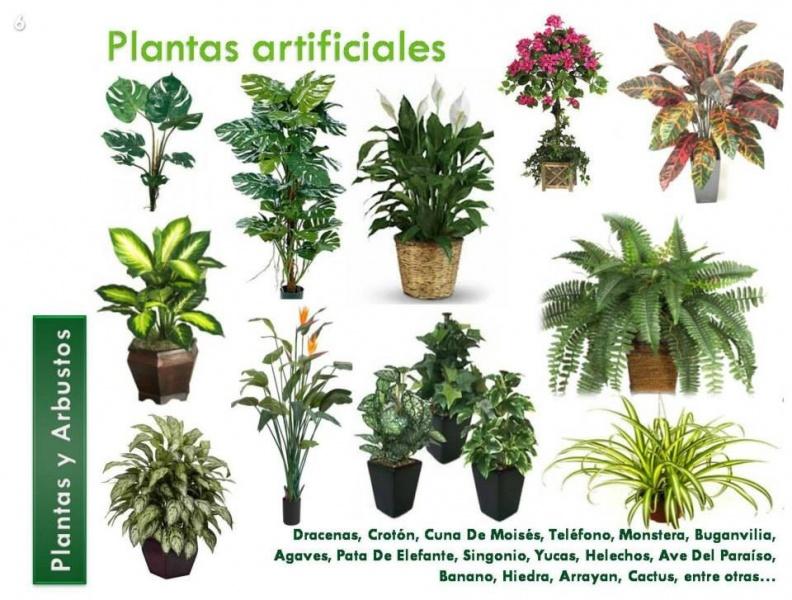 Plantas artificiales y muros verdes vivero la palapa - Tipos de plantas de exterior ...